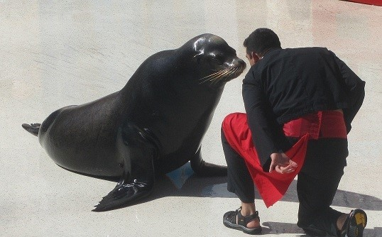 Man proposes to a sea lion.