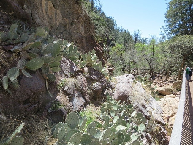 Prickly pear will keep you on the path!