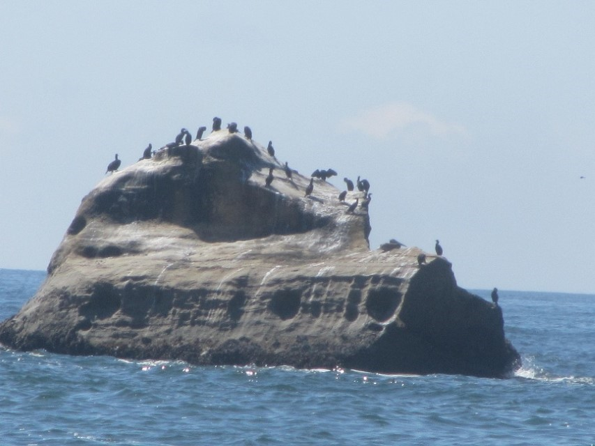This island is for the birds