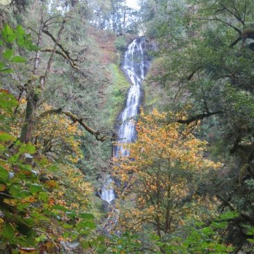 Final Days in Oregon, Fall 2015, What We Saw and What We Thought
